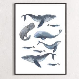 Постер Киты  - фото 2
