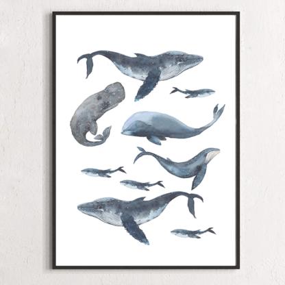 Постер Киты синие