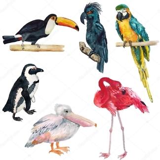 Наклейки на стену Экзотические птицы