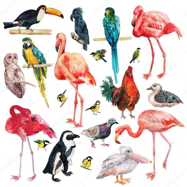Наклейка Птицы Тропические