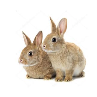 Постер хипстер-кролик