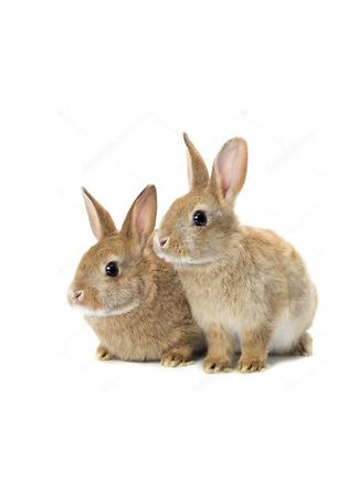Постер Крольчата  - фото