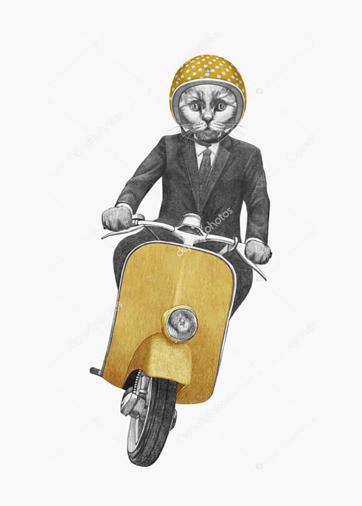 Постер Кот на мотороллере  - фото