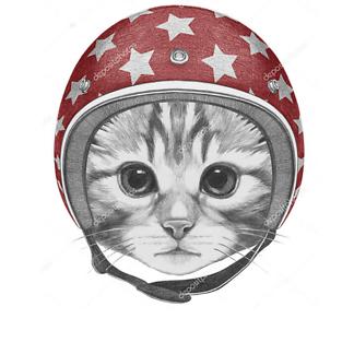 Котенок красном в шлеме