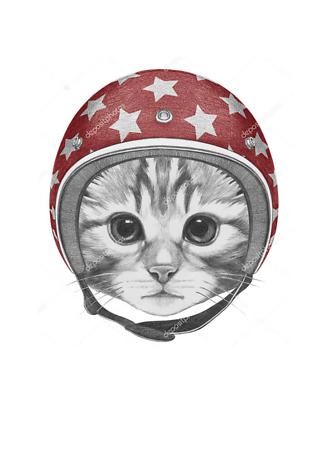 Постер Котенок красном в шлеме  - фото