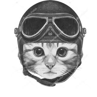 Котенок в шлеме
