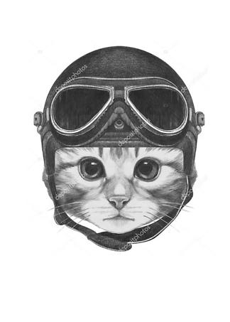 Постер Котенок в шлеме  - фото