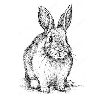 Кролик черно-белый