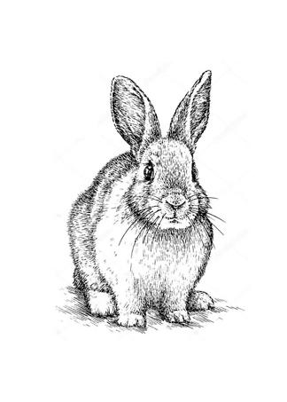 Постер Кролик черно-белый  - фото