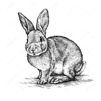 Кролик иллюстрация
