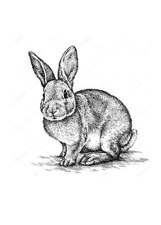 Постер Кролик иллюстрация  - фото