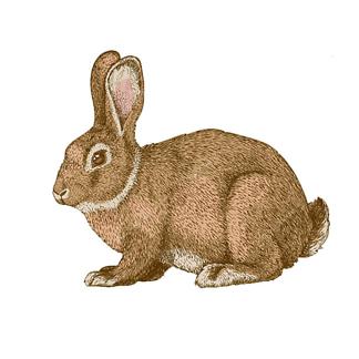 Постер Наряженная хипстер-кролик