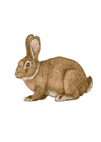 Постер Кролик в цвете  - фото