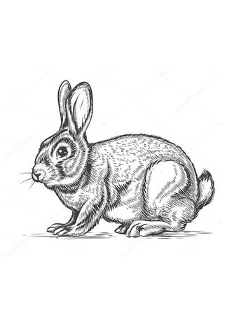 Постер Кролик в стиле гравировки  - фото