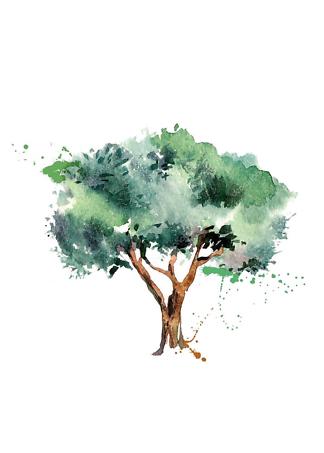 Постер Оливковое дерево  - фото