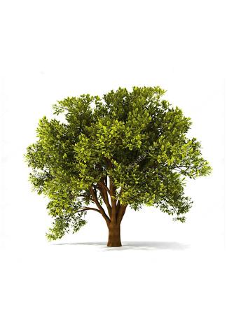 Постер Фото дерева  - фото