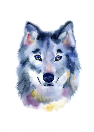 Постер Акварельный волк  - фото