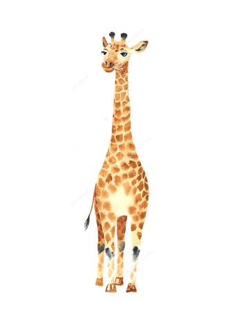 Постер Акварельный жираф  - фото