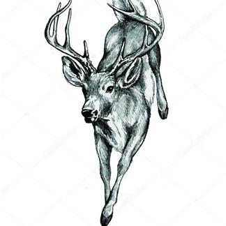 Постер Летний олененок