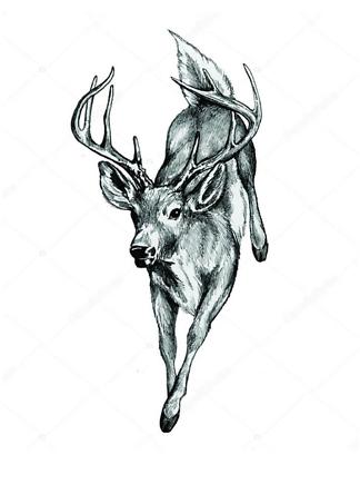 Постер Бегущий олень  - фото