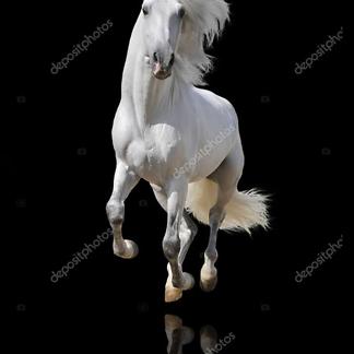 Постер Белая лошадь на черном фоне