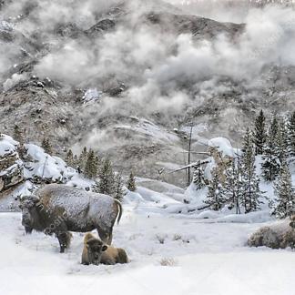 Постер Бизоны зимой