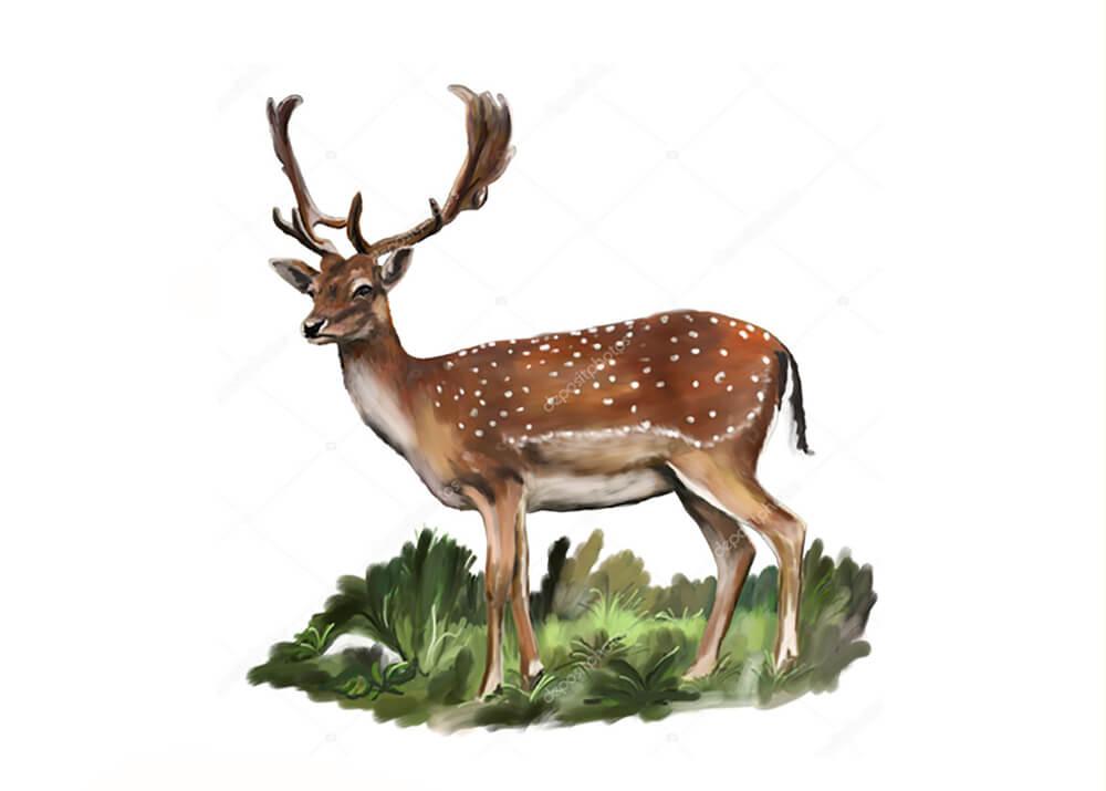 Постер Благородный олень  - фото