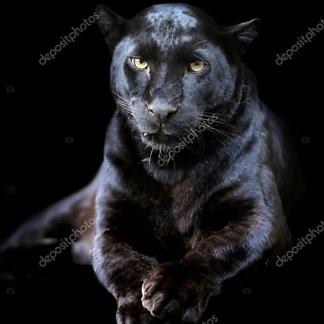 Черная панетра