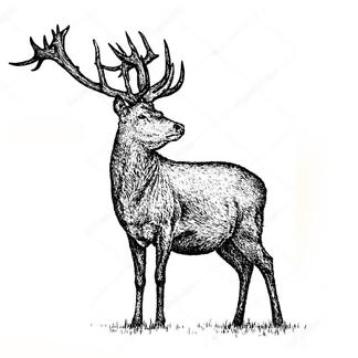 Постер Черно-белый винтажный олень