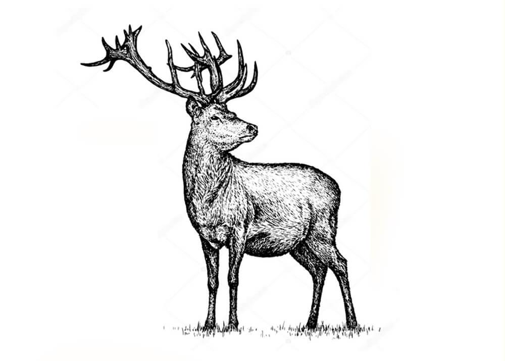 Постер Черно-белый винтажный олень  - фото