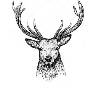 Постер Черно-белый портрет оленя