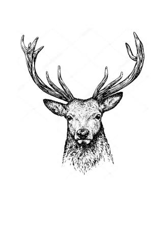 Постер Черно-белый портрет оленя  - фото