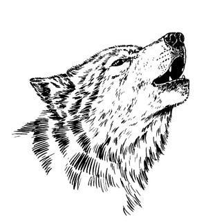 Постер Черно-белый волк
