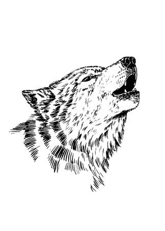 Постер Черно-белый волк  - фото