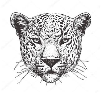 Постер Черно-белый ягуар