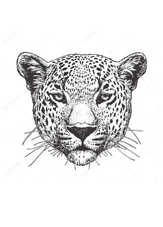 Постер Черно-белый ягуар  - фото
