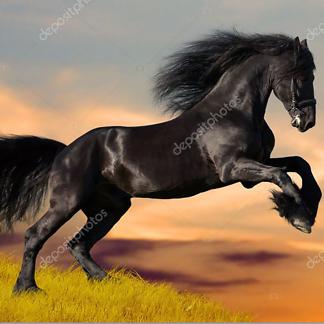 Постер Чёрный конь
