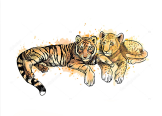 Постер Детеныши тигра и льва  - фото