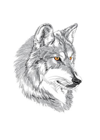 Постер Эскиз волка  - фото