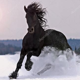Постер Фризская лошадь