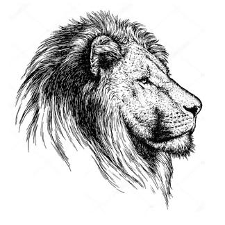 Постер Гравировка льва