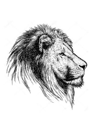 Постер Гравировка льва  - фото