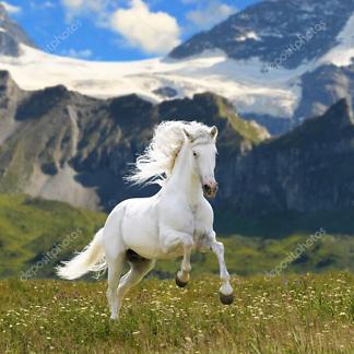 Постер Конь в долине