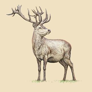Постер Бегущий олень