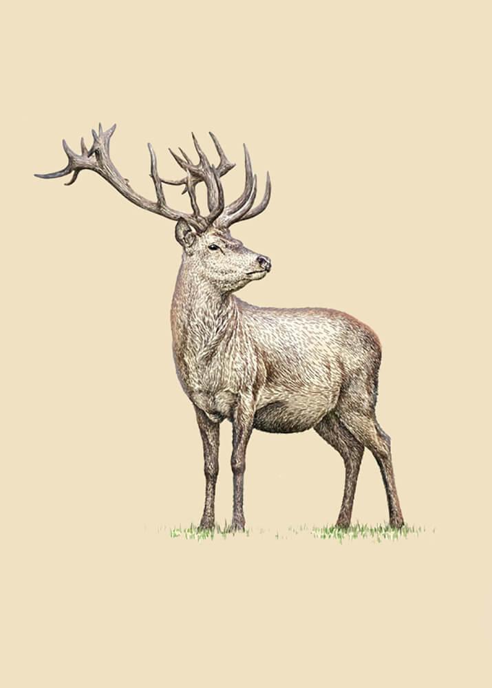 Постер Красивый олень  - фото