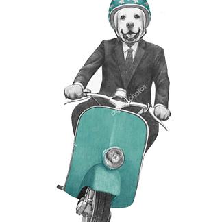 Постер Влюблённый щенок