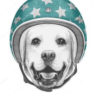 Постер Лабрадор в шлеме