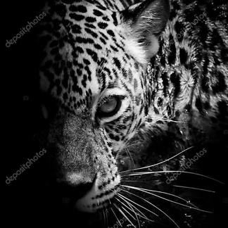 Постер Принт Леопард