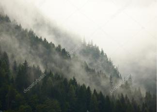 Постер Лес в тумане  - фото