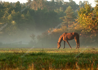 Постер Лошадь на туманном лугу  - фото